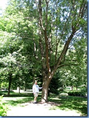 6483 Ottawa 1 Sussex Dr - Rideau Hall - Bill beside silver maple planted by Ronald Reagan