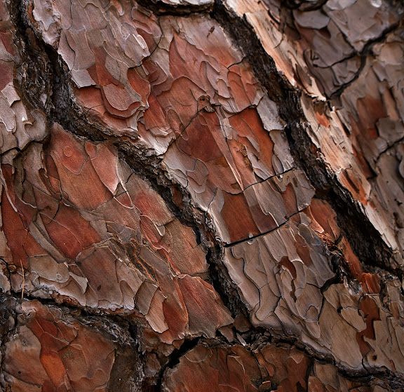 Taller de fotografia y senderismo junto a la Cumbrecita, en la caldera de Taburiente, Parque Nacional. Fotonature 2012.Isla de la Palma