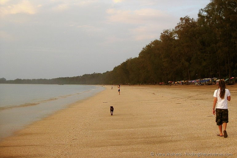 Dog beach thailand