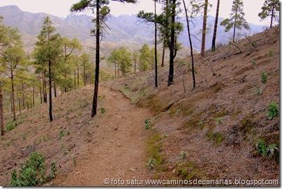 4466 Tauro-Cortadores-La Solana