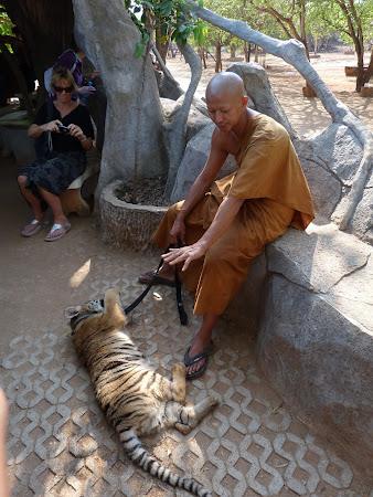 Templul tigrilor Thailanda: pui de tigru