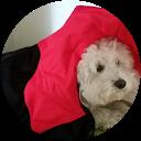 Immagine del profilo di azzurra angiulli