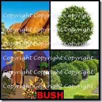 BUSH- 4 Pics 1 Word Answers 3 Letters