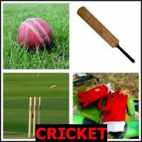 CRICKET- Whats The Word Answers