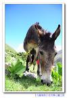 【在異鄉的小故事】和可愛的驢子相約尼泊爾~旅程中的奇妙緣分