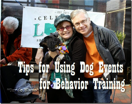 how to use dog events for behavoiral rehab training