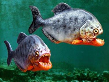 13. piranha.jpg