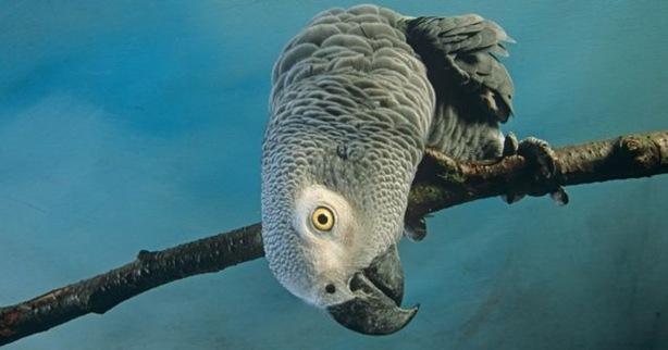 papagayos-inteligentes-638x336