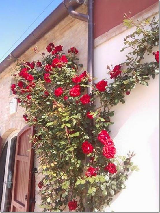 b&b Capodisole - Osimo - Marche (1)