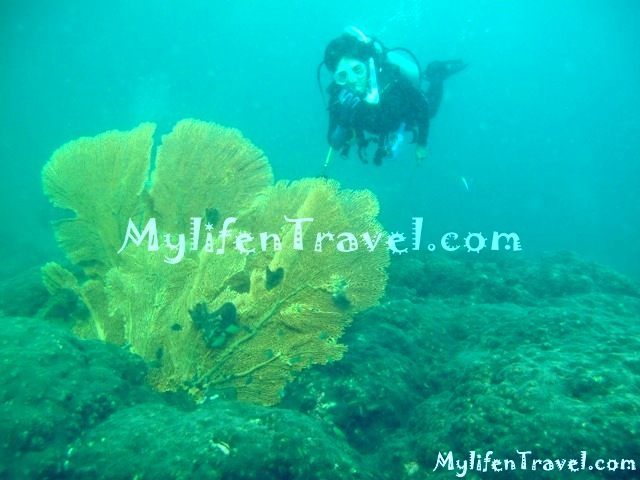 Koh Lipe Diving 71
