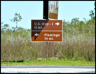 21 - Heading Back to Flamigo