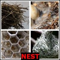 NEST- Whats The Word Answers
