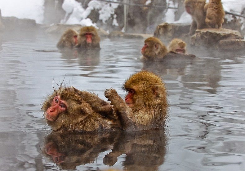 snow-monkeys-jigokudani-10