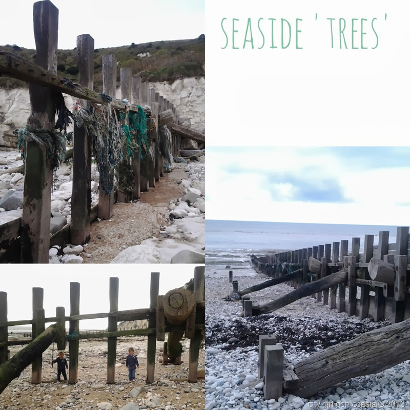 seaside trees