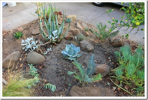 131007_driveway_succulent_bed_after_16