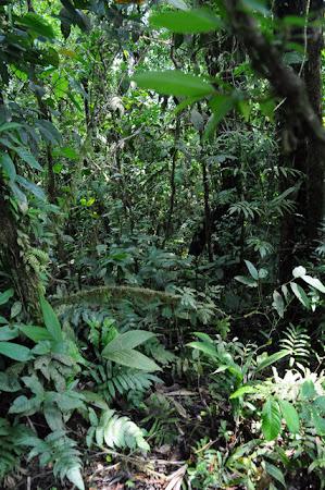 Aventura Costa Rica: Prin padurea tropicala, mergand spre Cerro Chato