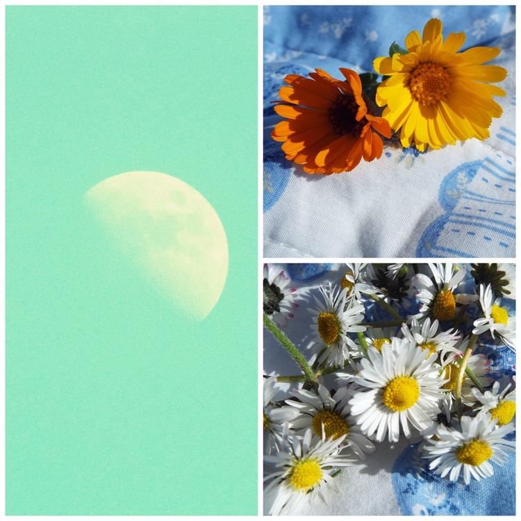 day time moon and fresh flowers