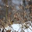 Goldfinch_in_the_Snow__Memorial_Park__Kilmainham-Pat_Carey.jpg
