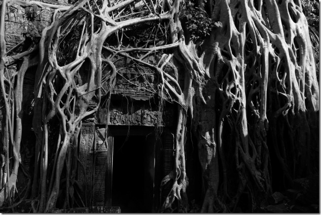 Ta Prohm temple taken over by the roots