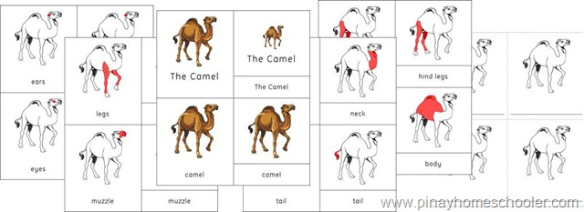 Asia Continent Elephant and Camel Nomenclature Cards