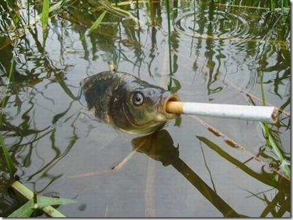 smoking-fish