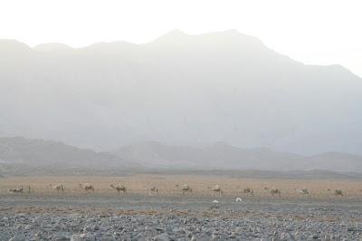 Ethiopia030.JPG