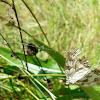 mariposa atrapada