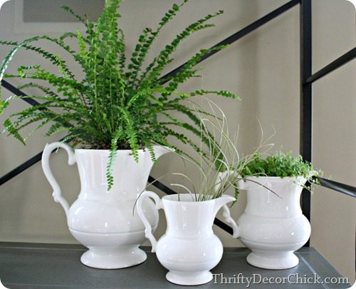 simple decorating -- plants in pitchers