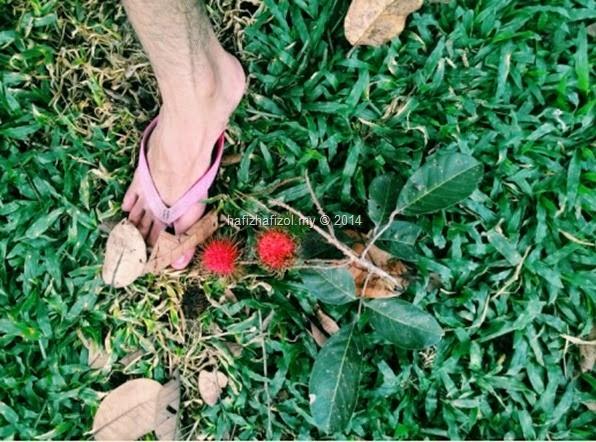 gambar kaki dan buah rambutan