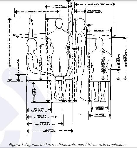 Antropometr a for Antropometria y ergonomia