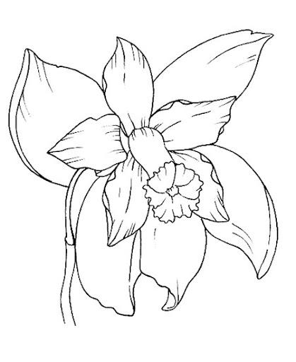 Orquidea Nacional Para Colorear | dibujos para colorear de la orquidea nacional imagui