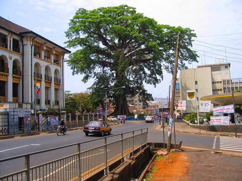 cotton-tree-freetown-1