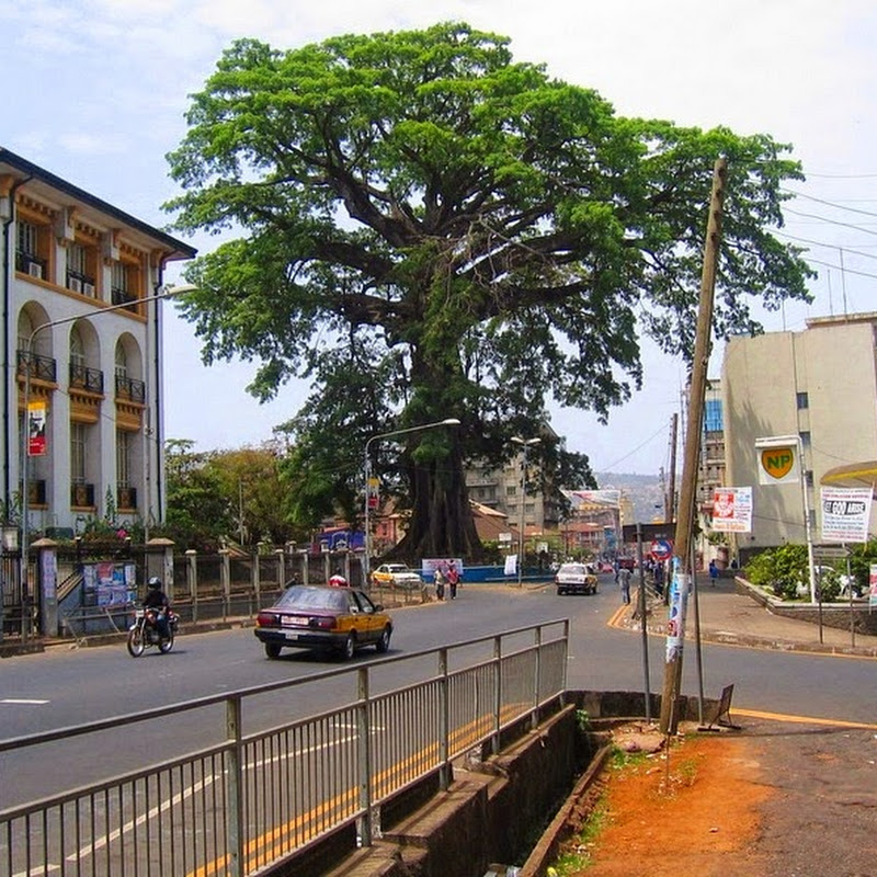 The Cotton Tree in Freetown, Sierra Leone