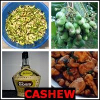CASHEW- Whats The Word Answers
