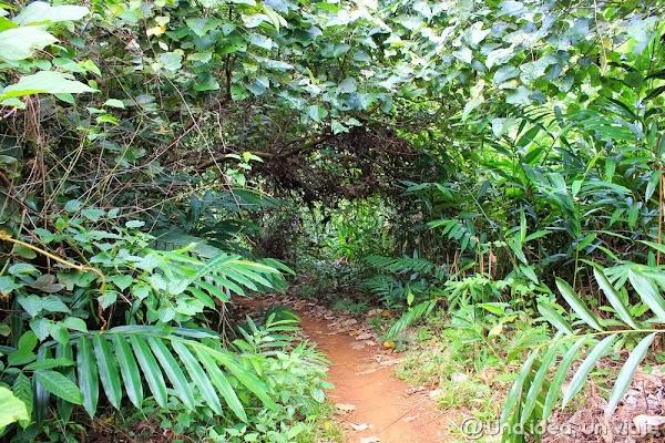 camboya-tekking-jungla-chi-phat-ecoturismo-unaideaunviaje.com-20.jpg
