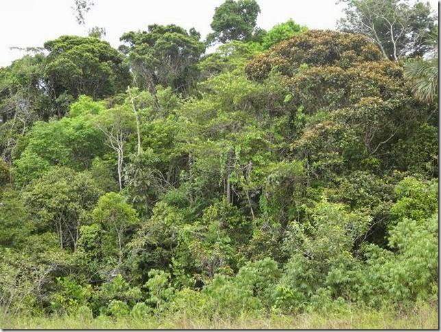 BR-319_Humaita_Manaus_Day_3_DSC05702