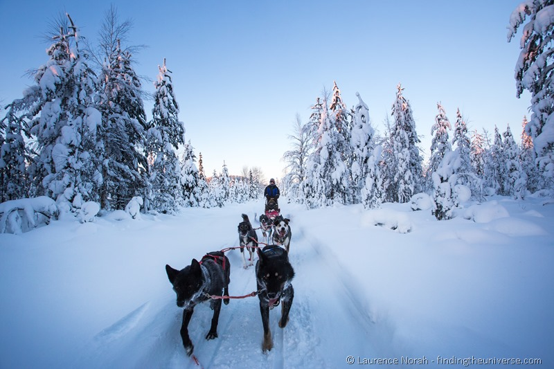 husky sledding in lapland