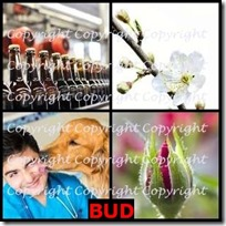 BUD- 4 Pics 1 Word Answers 3 Letters