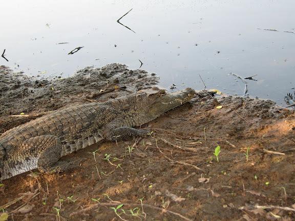 Shai Hills (Ghana), 10 janvier 2006. Photo : J. F. Christensen
