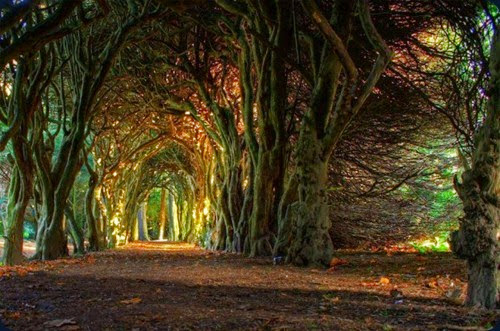 Fairytale-Tree-Tunnel-Ireland-620x411