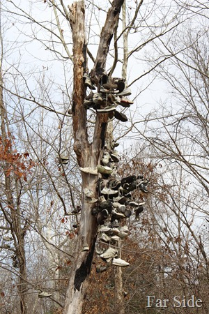 Original Shoe Tree