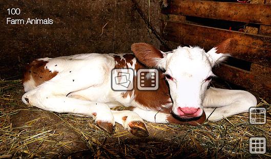 100种农场动物|玩教育App免費|玩APPs