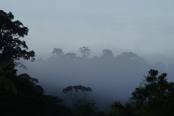 Brume matinale devant les Carbets de Coralie (Crique Yaoni), 31 octobre 2012. Photo : J.-M. Gayman