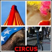 CIRCUS- Whats The Word Answers