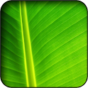 Green Wallpapers icon