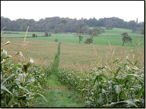 Path through corn, leading towards Ellel Grange Hall