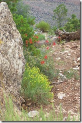 wildflowers in the canyon