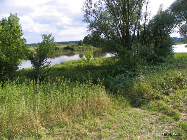 La Loire à Balbigny photo #405