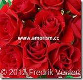 DSC02475.JPG Röda rosor blommor (1) beskuern med amorism och Fredrik.jpg