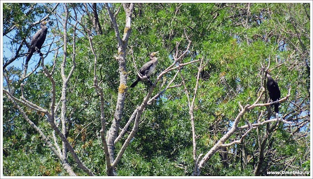 Птицы на реке Ропотамо. Созополь.